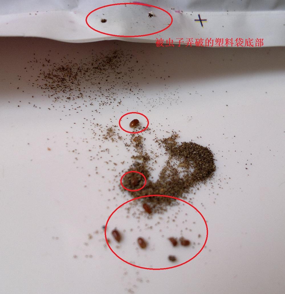 薰衣草粉末+虫子+被虫子咬破的塑料袋